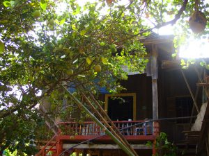 Pomelo tree in front of homestay 5 at Koh Trong Kratie